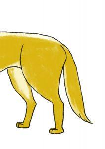 dog垂尾