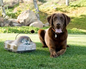 go-go-dog-pal1-www.gogodogpals.com