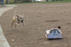 go-go-dog-pal2-www.gogodogpals.com
