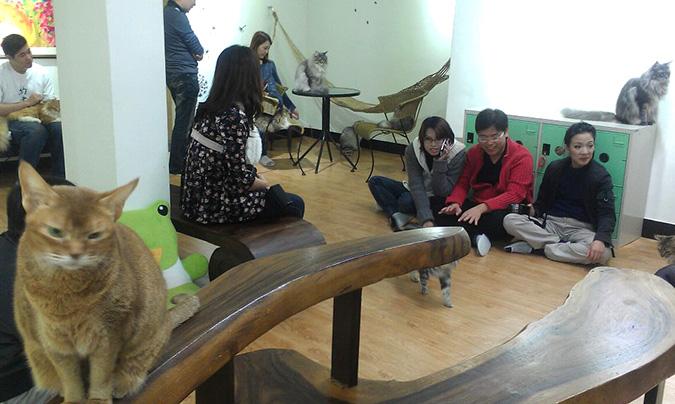 放鬆悠閒,貓奴專屬咖啡館-元氣貓客人與貓互動-3
