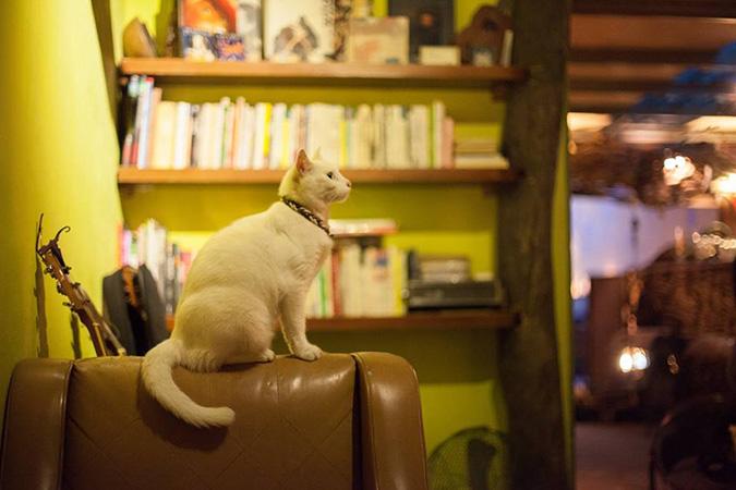 放鬆悠閒,貓奴專屬咖啡館-六號貓洞1