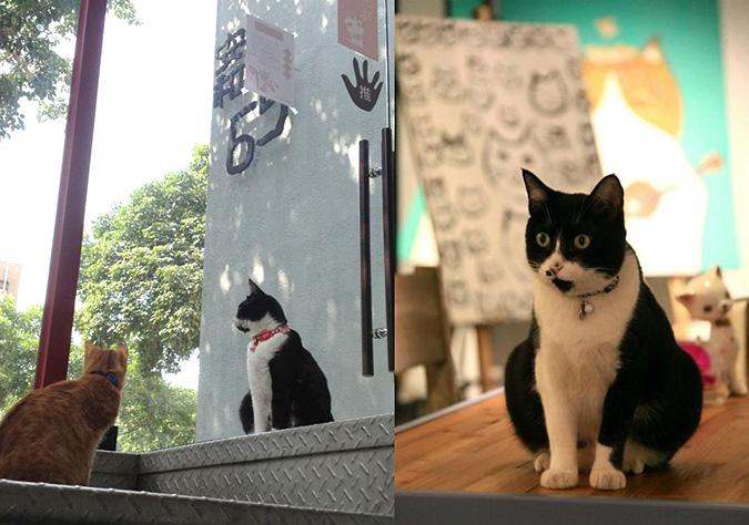 放鬆悠閒,貓奴專屬咖啡館-安和65