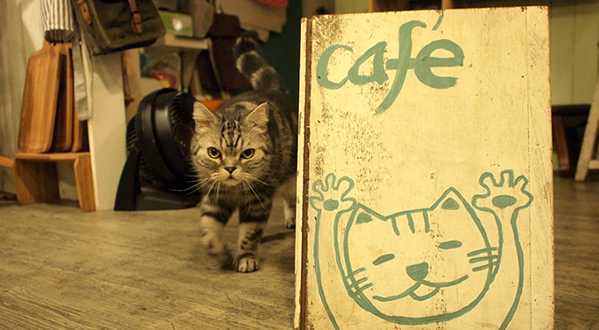 放鬆悠閒,貓奴專屬咖啡館-私藏不藏私