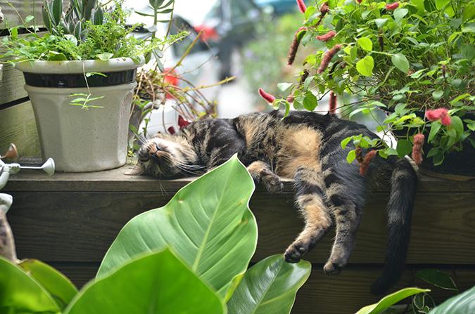 放鬆悠閒,貓奴專屬咖啡館-蘇格貓底-Black14