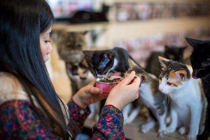 放鬆悠閒,貓奴專屬咖啡館-貓藝家-1
