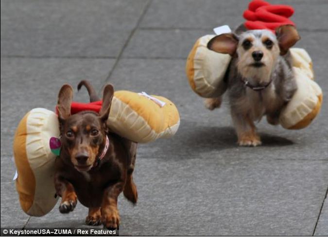 臘腸世界趣聞-熱狗