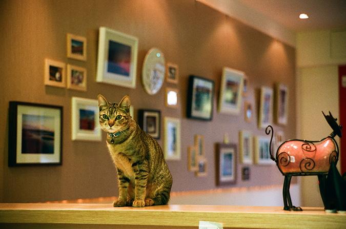 放鬆悠閒,貓奴專屬咖啡館-貓 旅行-03510028