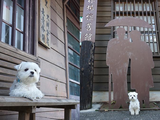 狗狗gogo!林田山林業文化園區2