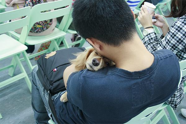20141025第二場的法國皇家狗狗聚樂部臘腸2