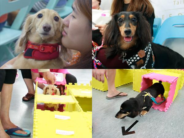 20141025第二場的法國皇家狗狗聚樂部臘腸