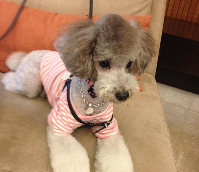 狗狗花色-林瓊惠_貝克