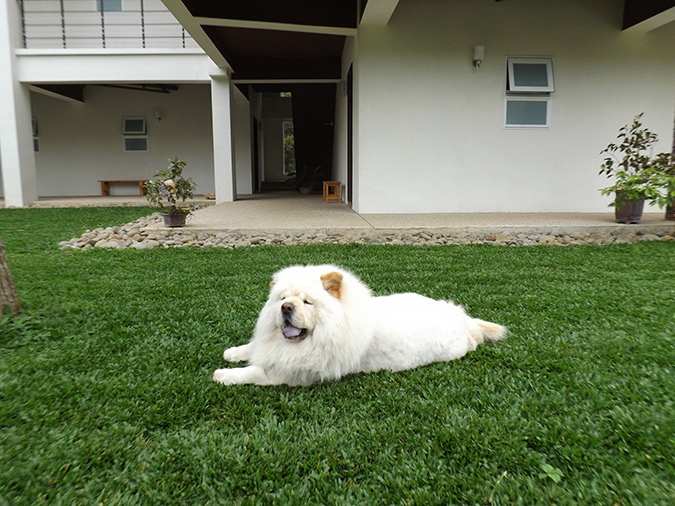 狗狗花色-許莉芸_獅王