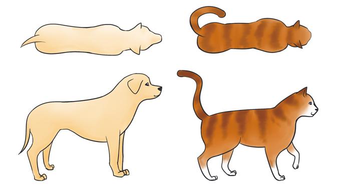 要怎麼看出寵物是否過胖-正常體型