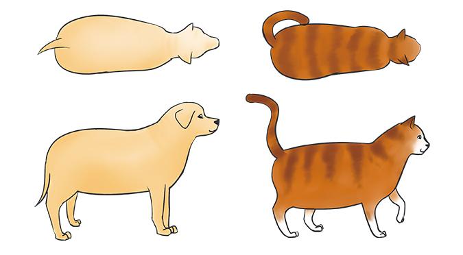 要怎麼看出寵物是否過胖-過胖體型