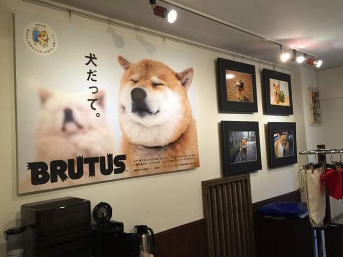 人氣柴犬-丸太郎的主題館-丸太郎-1