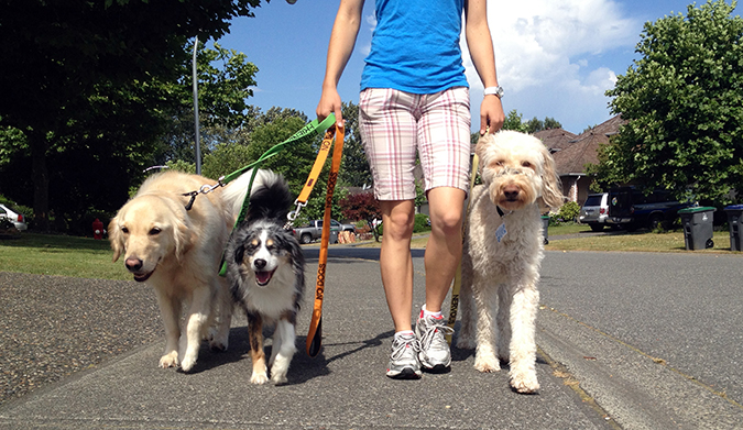 專屬寵物特殊服務-Pet Sitters寵物保母-cloudninecaninesinc.com