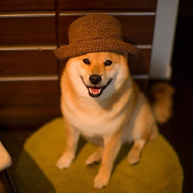人氣柴犬-丸太郎的主題館-丸太郎-4