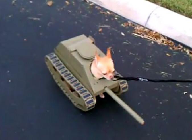 PetSmart萬聖節寵物變裝大會-tank_dog-3