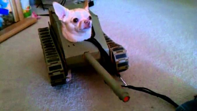 PetSmart萬聖節寵物變裝大會-tank_dog-1