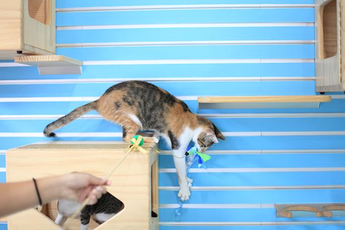 淘氣喵星人行為解析-貓跳台