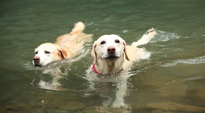 狗狗出遊踏青-叮嚀準備不可少-游泳