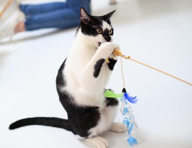 讓貓咪更愛運動的方式02