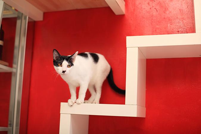 讓貓咪更愛運動的方式03