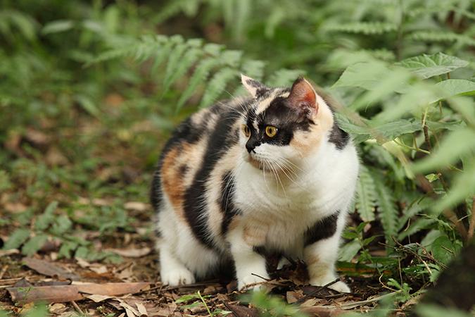 讓貓咪更愛運動的方式05