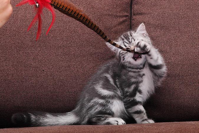 貓皇很難懂?精選12個難解謎題-玩羽毛