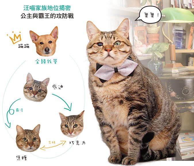 蹦蹦汪喵登場07