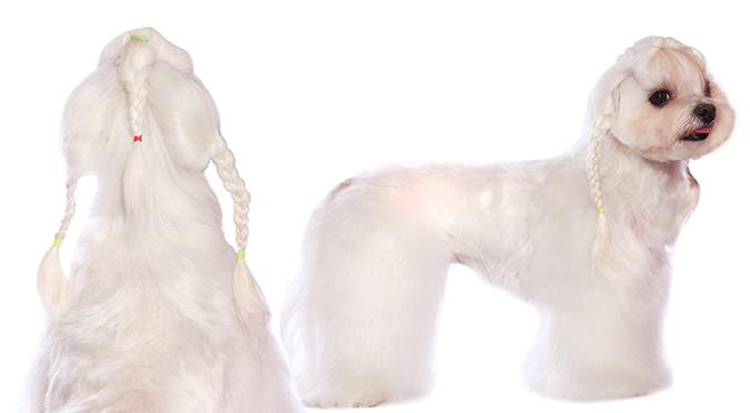 瑪爾-頭飾編髮03-02