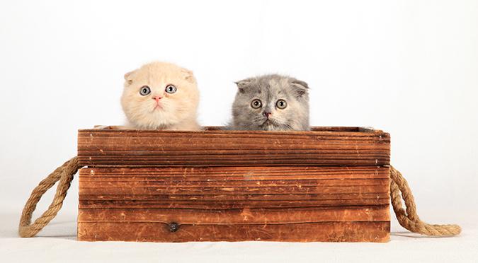 貓皇很難懂?精選12個難解謎題-小貓瞳孔