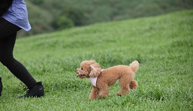 主人與寵物一起的運動有那些呢-慢跑