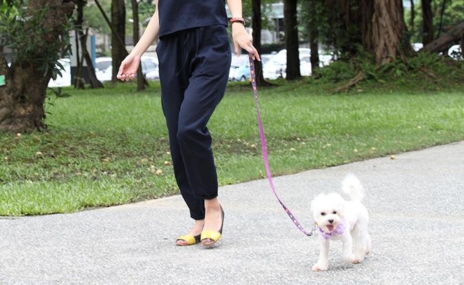 主人與寵物一起的運動有那些呢-散步