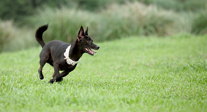 主人與寵物一起的運動有那些呢-追逐