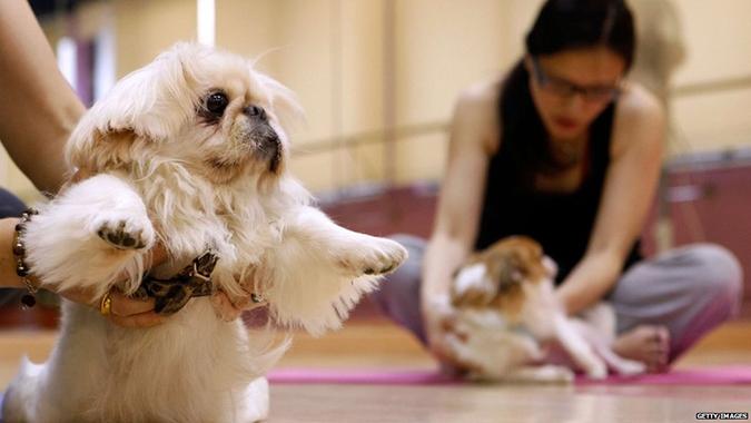 主人與寵物一起的運動有那些呢-DOGA