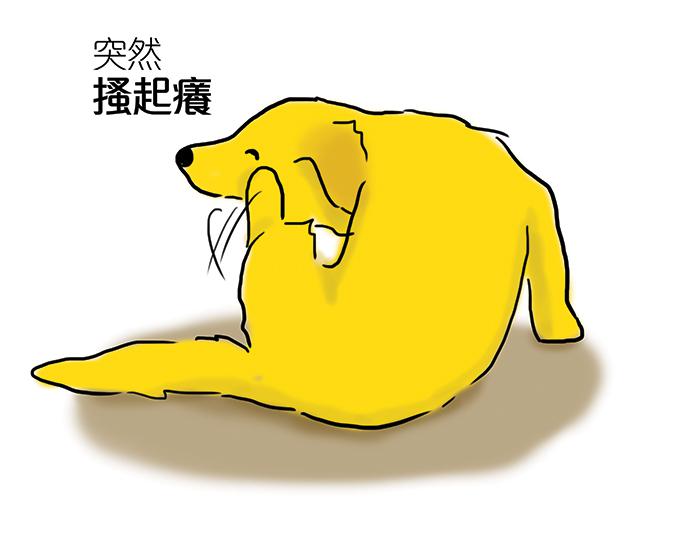 常見狗狗安定訊號-狗抓癢