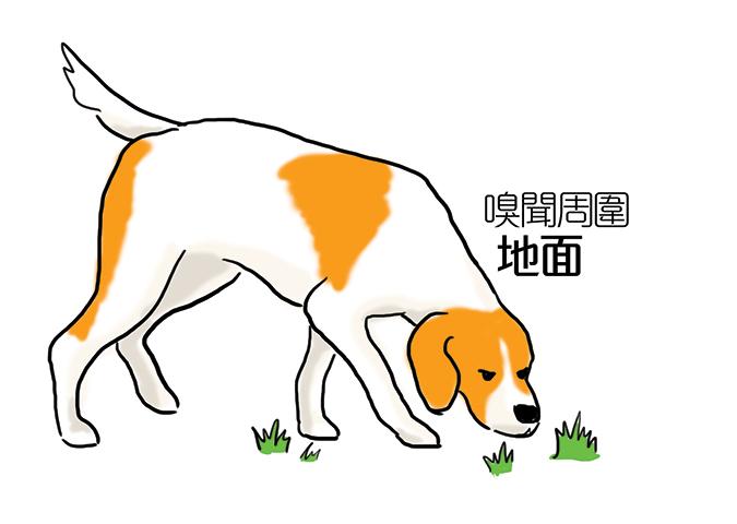 常見狗狗安定訊號-狗聞地面