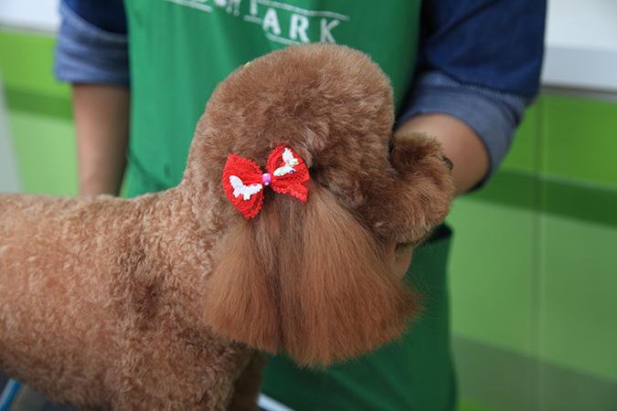 挑戰!狗狗1分鐘美容術-止血鉗綁頭花