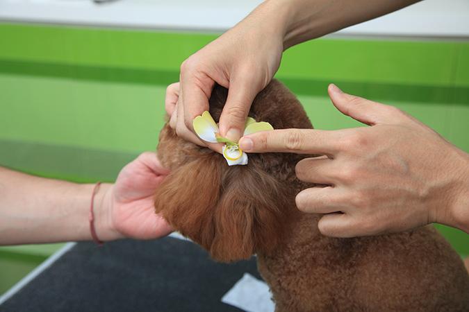 挑戰!狗狗1分鐘美容術-頭花速綁