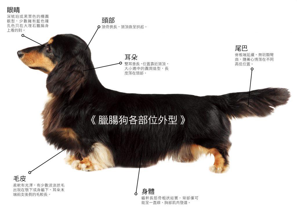 臘腸狗外觀標準