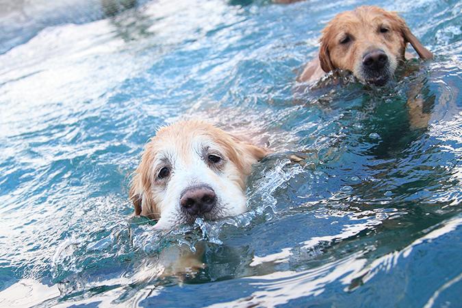 主人與寵物一起的運動有那些呢-游泳