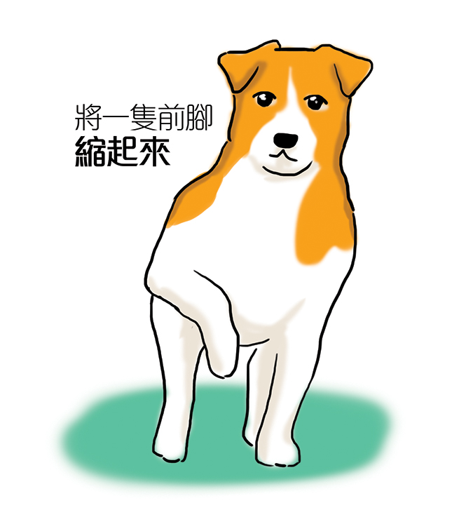 常見狗狗安定訊號-狗單舉一支腳
