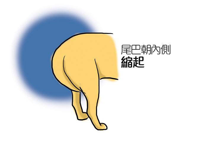 常見狗狗安定訊號-狗夾尾巴