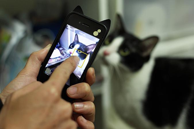 用手機輕鬆拍出好質感寵物照