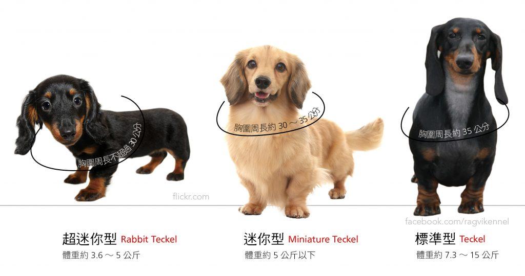 臘腸狗體型差異