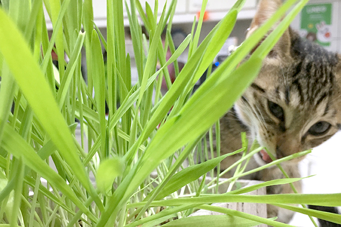 貓咪這樣吃營養夠不夠?