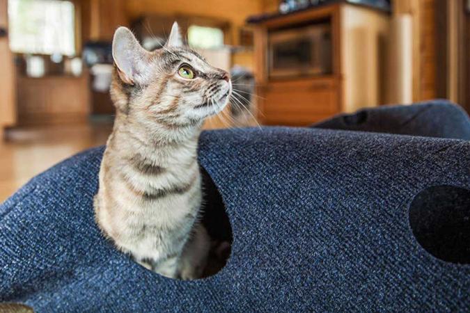 貓奴必拜搶手好物-Ripple Rug貓洞遊戲毯-1