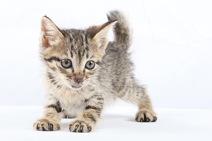 辨識喵星人特性-小貓眼睛
