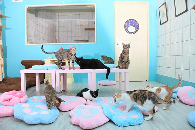 認養貓の娘家-貓藝家、給我一隻貓